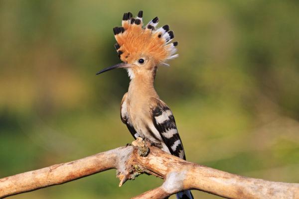 ما هو الطائر الذي يحرم قتله