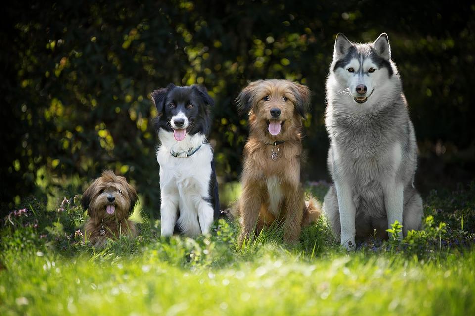 كم فترة حمل الكلاب