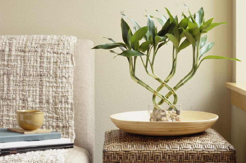 العناية بنبات البامبو
