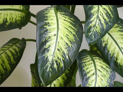 نباتات منزلية لاتحتاج لأشعة الشمس
